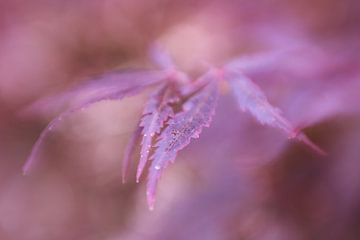 Abstracte herfstkleuren sur LHJB Photography