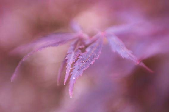 Abstracte herfstkleuren van LHJB Photography