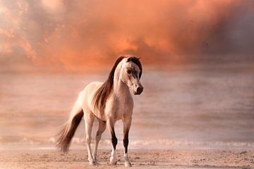 Pferd am Strand von ingrid schot