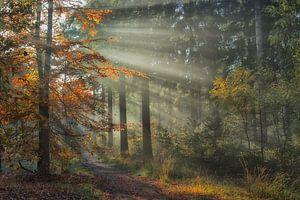"""""""En het regent zonnestralen .................."""" van Jacqueline Gerhardt"""