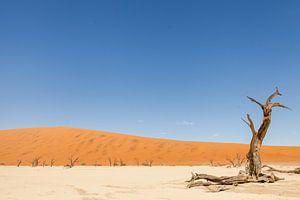 Verlaten landschap Deadvlei Namibië van