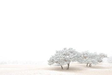 Witte Wereld 2 von Wijs & Eigen