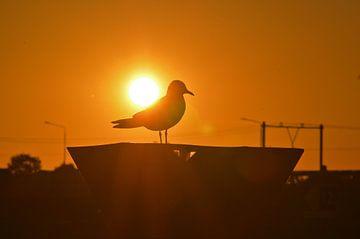 Meeuw bij zonsondergang van Jaimy Buunk