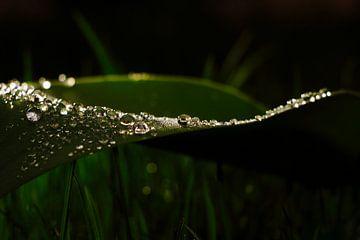 Wasserperlen auf grünem Blatt von Tobias Majewski