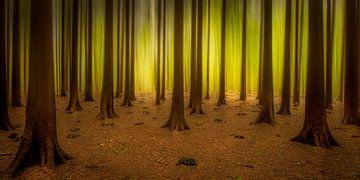 Lichtend bos van Piet Haaksma
