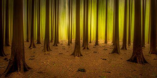 Lichtend bos