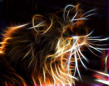 Cat van Rosa Fotoart