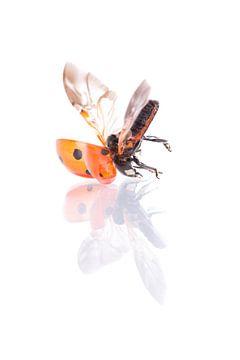 Flying ladybug sur Celina Dorrestein