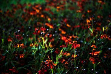 zonsondergang bloemenveld von Charlotte van de Zande
