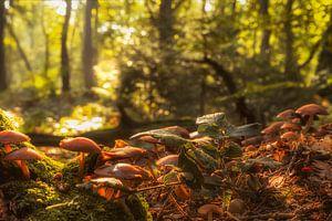 Herfstsfeer in het Vijlenerbos in Zuid-Limburg van John Kreukniet