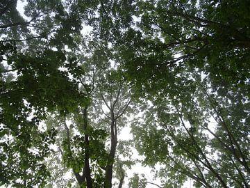 Lentegroen gebladerde bomen in het ochtendlicht van Edwin van Rossen