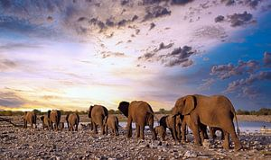 Elefantenherde wandert in den Sonnenuntergang, Namibia von W. Woyke
