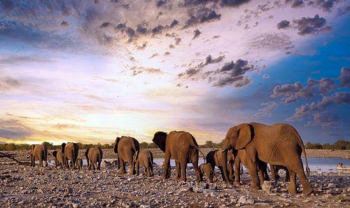 Elefantenherde wandert in den Sonnenuntergang, Namibia