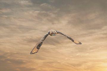 Ein eurasischer Uhu oder Uhu. Fliegt mit ausgebreiteten Flügeln gegen einen dramatischen braun-golde von Gea Veenstra