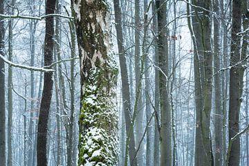 berk en winter van Tobias Luxberg