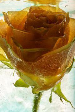Roos in ijs van Marc Heiligenstein