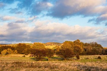 Landschaft auf der Insel Moen in Dänemark. von Rico Ködder