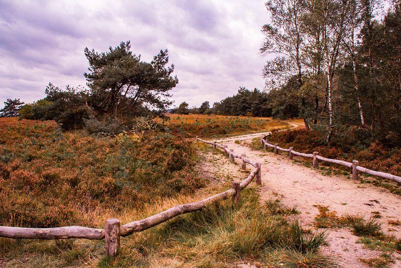 Herfstglorie van de Veluwe - Pad nr. 1 van Deborah de Meijer