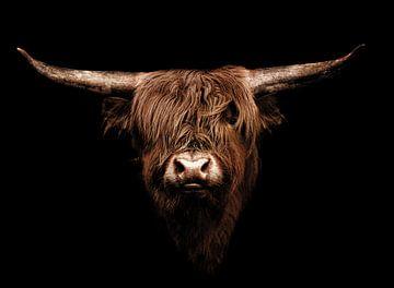 Vache Highlander sur Mark Zanderink