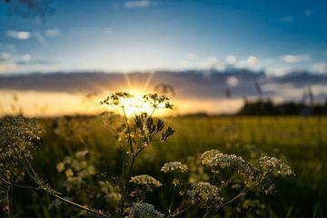 Zonsondergang von Bart Nikkels