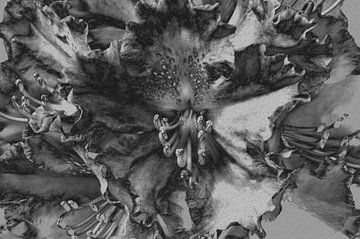 Rododendron in zwart-wit  van Gera Wijlens