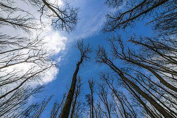 Bomen rijken aan het firmament von Tieme Snijders
