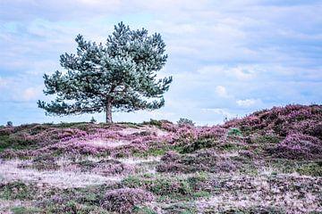 Heide in bloei von Jo Pixel