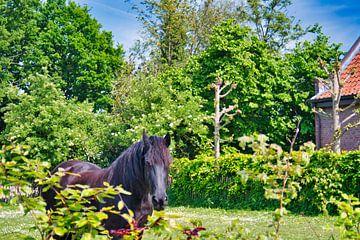 Süßes schwarzbraunes Schönheitspferd von J..M de Jong-Jansen
