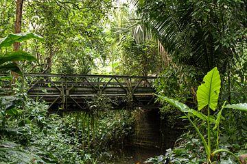 Brücke im Busch. von Mark Nieuwkoop