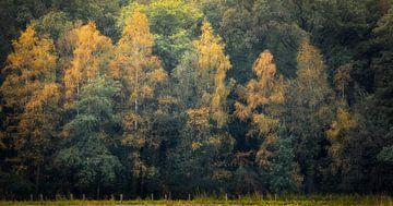 Les contours de l'automne sur Ton Drijfhamer