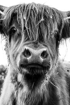 Schottischer Hochlandbewohner von Tineke Oving