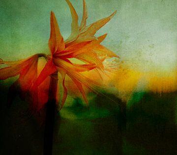 Portret van een amaryllis van Marijke van Loon