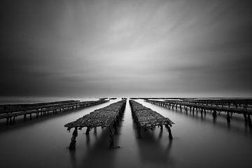 Austern von Rudy De Maeyer