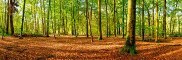 Wald im Herbst von Günter Albers