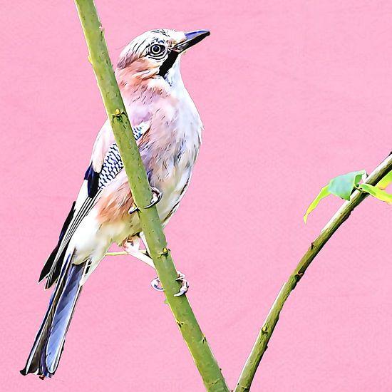 Vlaamse gaai (roze achtergrond) van Art by Jeronimo