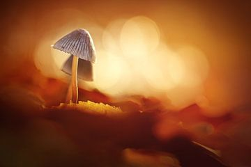 Herbstgold von Bob Daalder