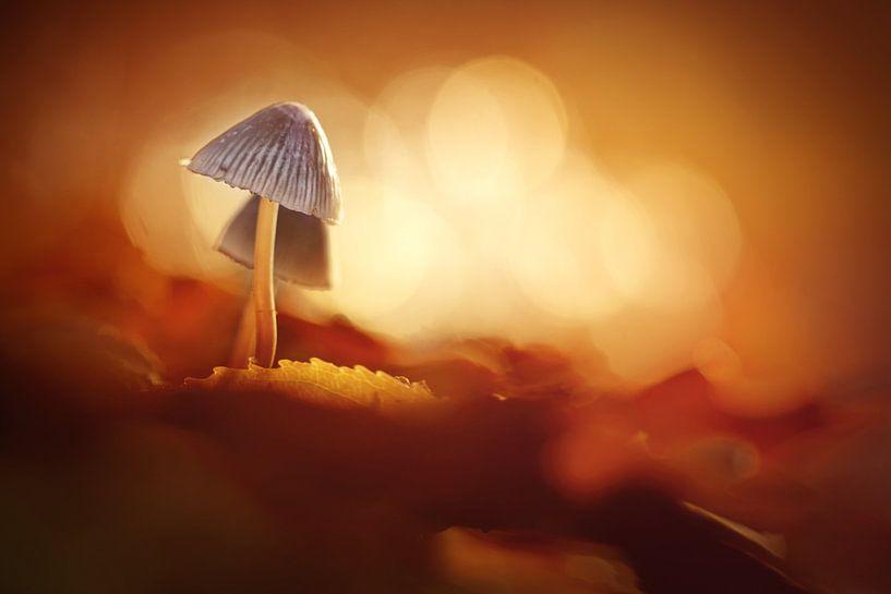 Herfst Goud van Bob Daalder