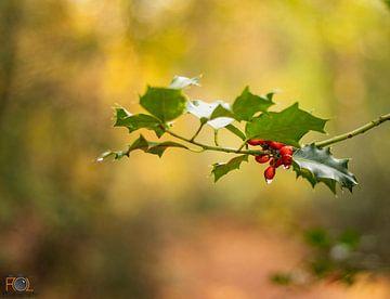 Hulst in herfstkleuren! van Arnold Loorbach Photography