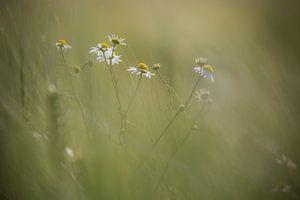 bei Weizen von Alain Deflou