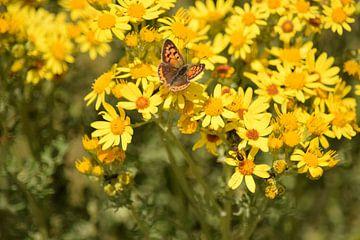 Bruine vlinder op gele bloemen van Nicolette Vermeulen