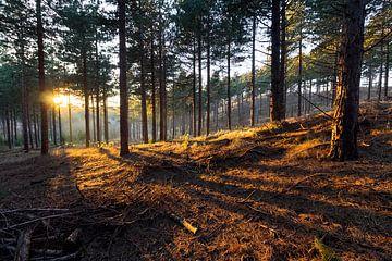 Het warme bos van Nathan Marcusse