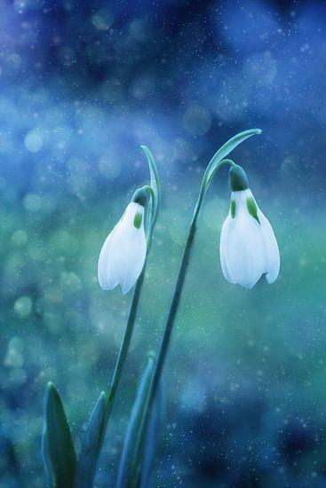 Magische sneeuwklokjes.. van LHJB Photography