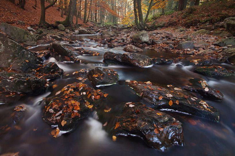Herfst in de Ardennen van Bendiks Westerink