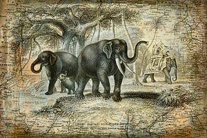 Indian Elephants Journey