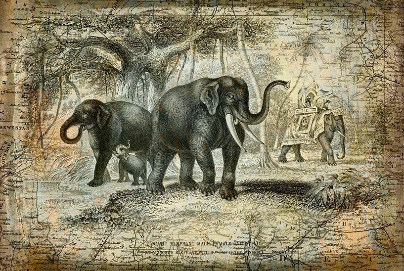 Indian Elephants Journey van Andrea Haase