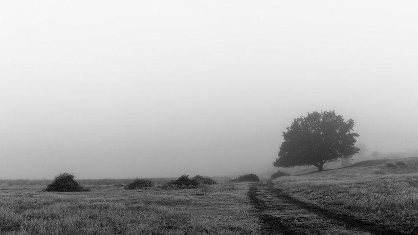 Loneliness van William Mevissen