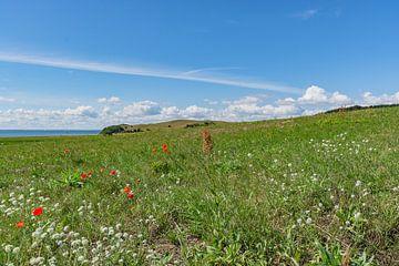 Klatschmohn und Wiesenblumen, Groß Zicker,  Rügen von GH Foto & Artdesign