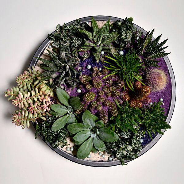 Schaal met vetplanten van Benny Van Bockel