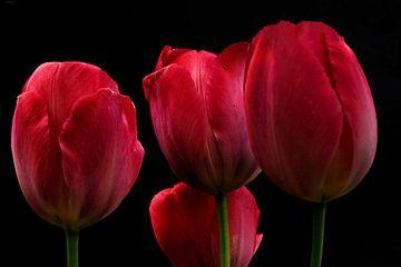 Tulpen van Frans van der Gaag