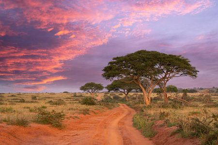 Zonsondergang in Murchison Falls Nationaal Park, Oeganda van Alexander Ludwig